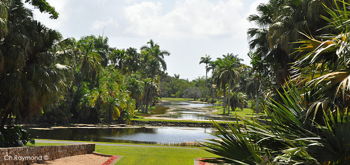 Palmiers cycas for Jardin l encyclopedie